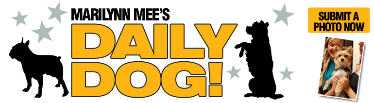 DailyDog2015_big